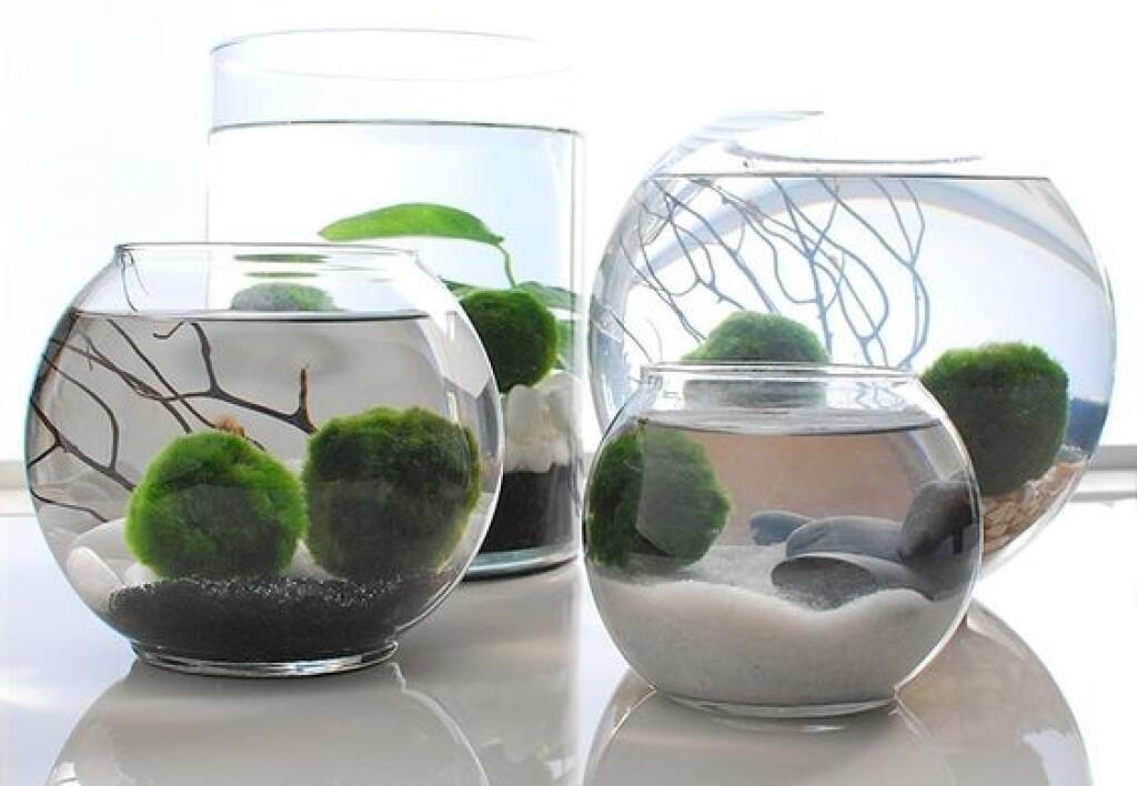 Riasogule si zamilujete! Vieme, ako pestovať tieto roztomilé vodné  rastlinky | 2