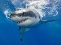 Žraloky nie sú žiadne vraždiace monštrá. Omnoho viac ľudí zabijú psy, kravy, delfíny či včely