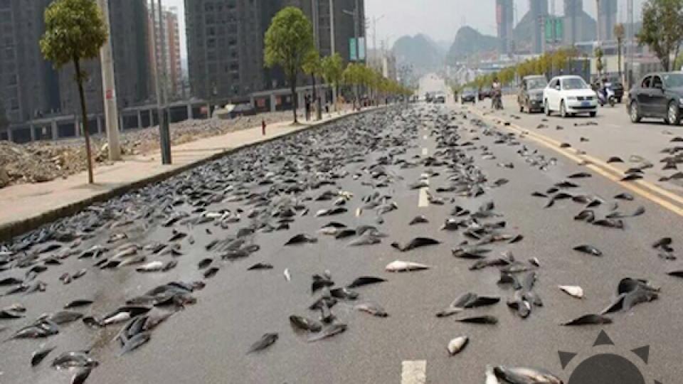 V Číne začali z neba padať morské živočíchy.