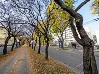 Bratislava sa pustila do inventúry štvrť milióna stromov. Padnúť môže až polovica zelene