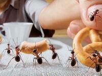 Máte doma problém s mravcami? Vďaka tomuto sa vašej domácnosti vyhnú širokým oblúkom!