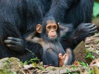 """V súvislosti s fotením divo žijúcich zvierat si skôr väčšina z nás povie, že príroda je krutá. Koniec koncov, takmer v každom dokumente nám dokazuje, že """"tam vonku"""" platí zákon silnejšieho, a že väčšina zástupcov fauny je len článkom v potravinovom reťazci."""