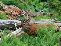 Zelená vojna: Pre jedných je prioritou hospodárenie, pre druhých ochrana prírody
